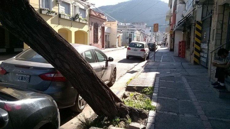 Con los pasos de los días y las tormentas, el árbol va cediendo un poco más y se muestra mucho más inclinado.