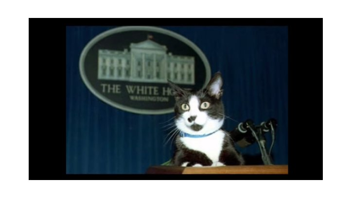Socks, el gato del expresidente Clinton.