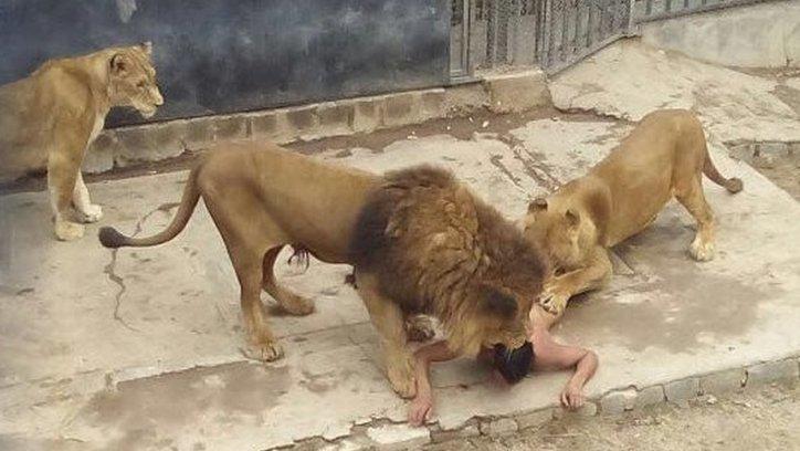 El león y la leona atacaron al joven suicida dentro de la jaula. La pareja animal fue sacrificada. Ocurrió en el Zoológico de Santiago de Chile. Foto Soy Aconcagua