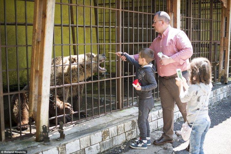 Los visitantes le dan de comer comida chatarra.