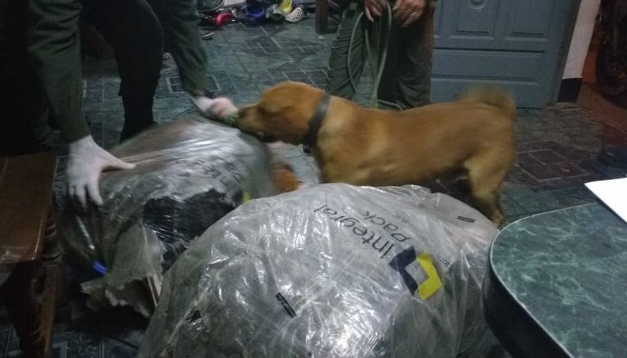 Los perros Tyler y Tango secuestraron más de 21 kg de cocaína