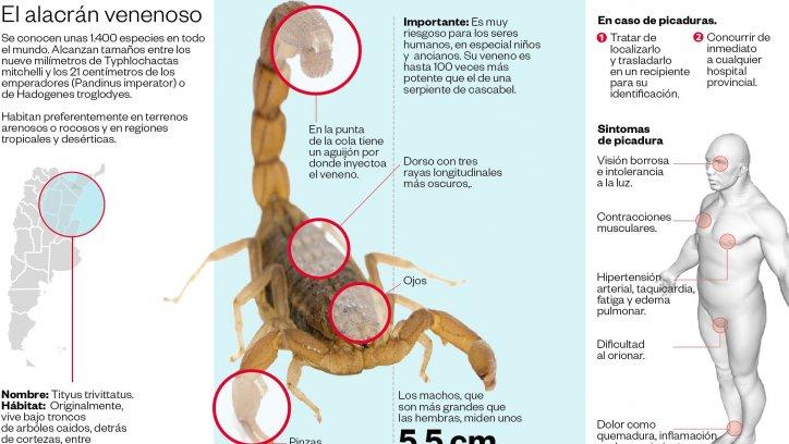Infograqfía: Diego Broglio