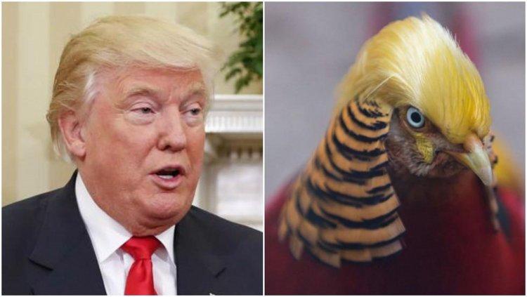Este tipo de aves muestra unas plumas más gruesas en invierno y, por ello, observamos un pelazo tan dorado en su cabeza.